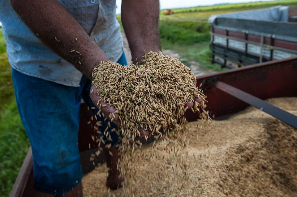arroz organizaco.jpg