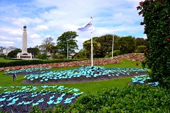 Forget-me-nots on Plymouth Hoe. Nikon D3100. DSC_0597.