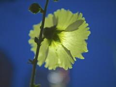 flower_P1230451