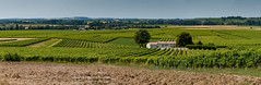 Pays du Cognac - Petite champagne - Arthenac - Charente maritime (17) - Photo of Saint-Germain-de-Vibrac