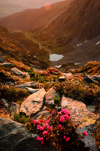 morning lake mountains sunrise landscape rhododendron romania