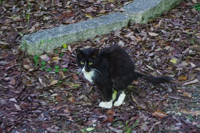 Today's Cat@2016-12-31