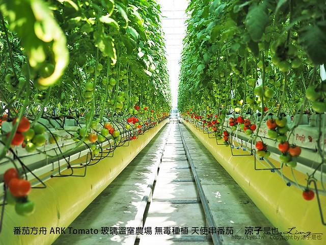 番茄方舟 ARK Tomato 玻璃溫室農場 無毒種植 天使串番茄 47