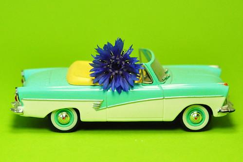 Kornblume Centaurea cyanus Zyane Flockenblume kornblumenblau Ackerpflanze Ford Taunus 17 M de Luxe Cabriolet (1957 bis 1960)
