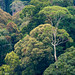 Danum Valley, Borneo by Tom's Macro and Nature Photographs