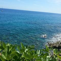 #varazze #lungomareeuropa #liguria #Italy #summer #sun #fico #fogliedifico:leaves::leaves::leaves: #fig #figleaves #fichiemare #domenica #fogliedifico