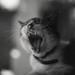 Gato Polypan by diegoriveragutierrez