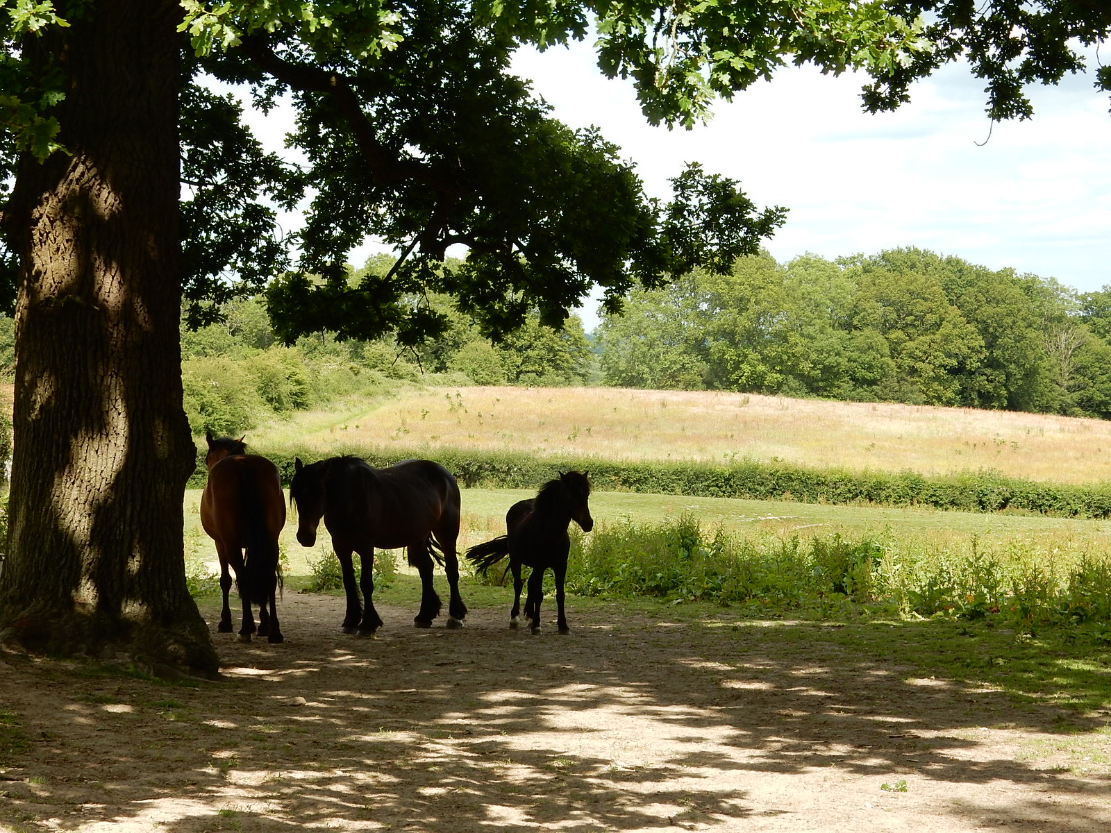 Horses in the shade Stonegate Circular