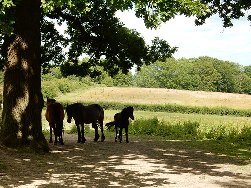 Horses in the shade