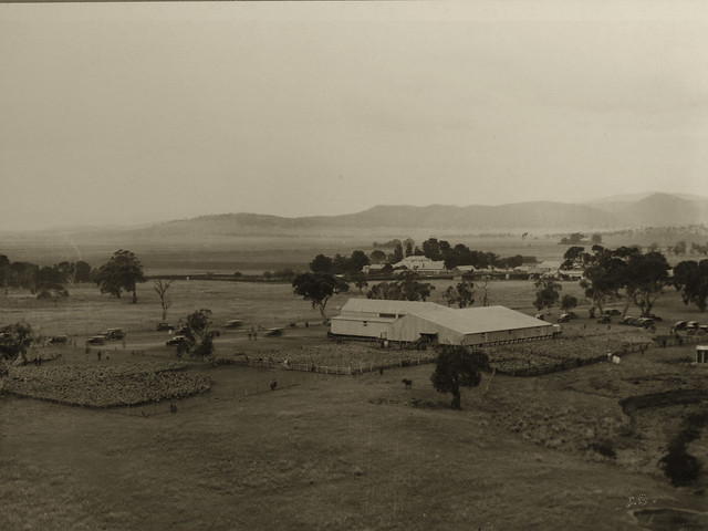 Carwoola Clearing sale, 1928.  Photo courtesy Ted Bladwell and Carwoola Pastoral Co