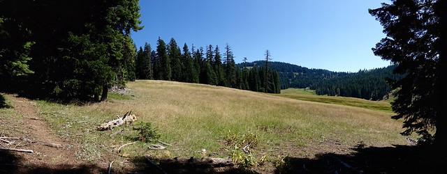 Siskiyou meadow