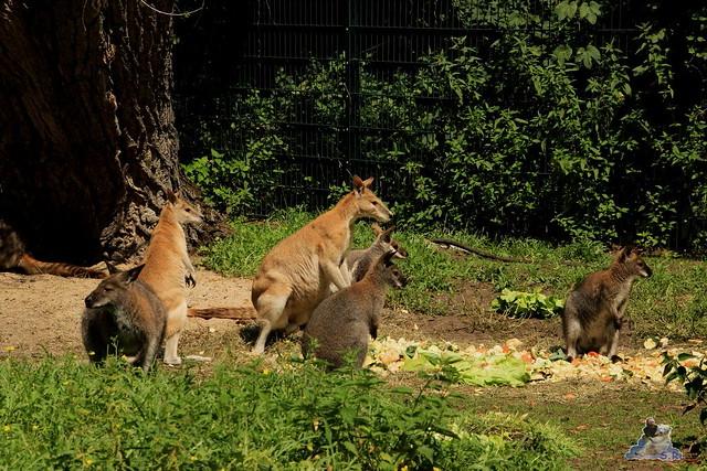 Tierpark Berlin 18.07.2015 0119