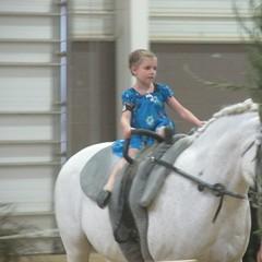 animal sports, equestrianism, mare, stallion, equestrian sport, halter, bridle, horse,