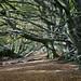 Dorset Woods