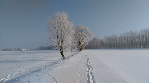 Spuren im Schnee Snow Tree Winter Bare Tree No People Nature Cold Temperature Day Fragility Christmas Tree Outdoors Landscape Beauty In Nature Snowing Sky
