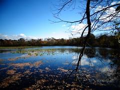 Wantagh - Twin Lakes Preserve - Autumn (14)