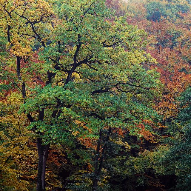 Autumn Painting - Velvia 100 exp*