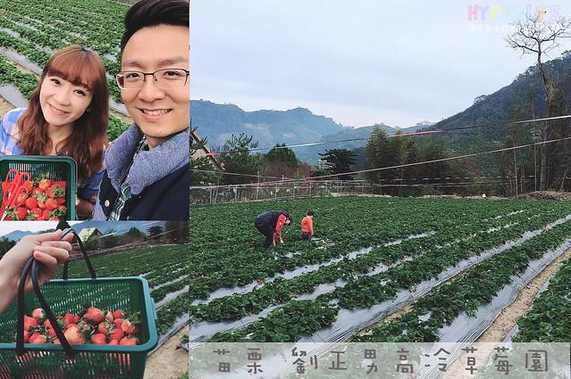 劉正男高冷草莓園 cover