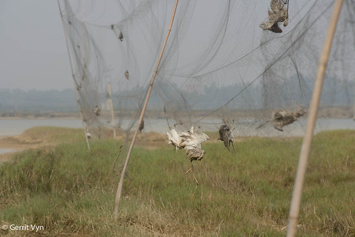 廣東非法鳥捕情形。(攝影:Gerrit Vyn;香港觀鳥會提供)
