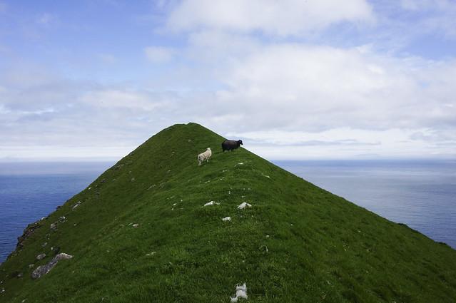 12. Faroe