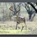 NL8A5280_120dpi by butchramirezphotography