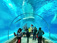 Aquarium in Ocean Park, Hong Kong, November 2016
