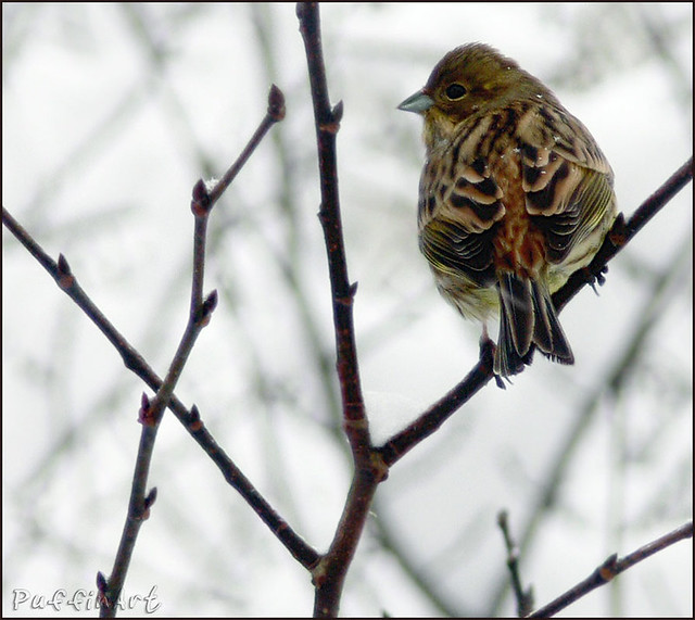 Winter Backyard Birds : Recent Photos The Commons Getty Collection Galleries World Map App