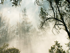 Foggy Forest Series, 23