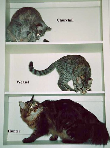 Bookcase.cats
