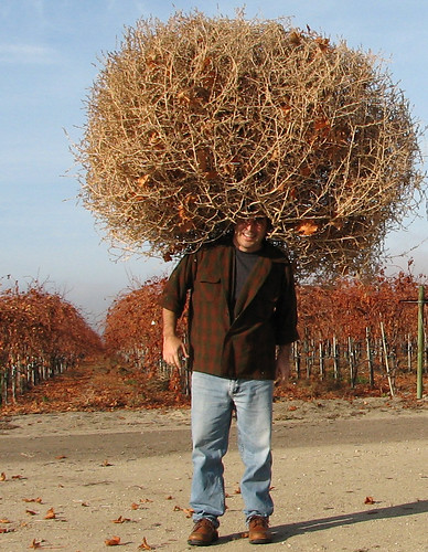 A man wearing a giant tumbleweed for a hat in front of vineyards.