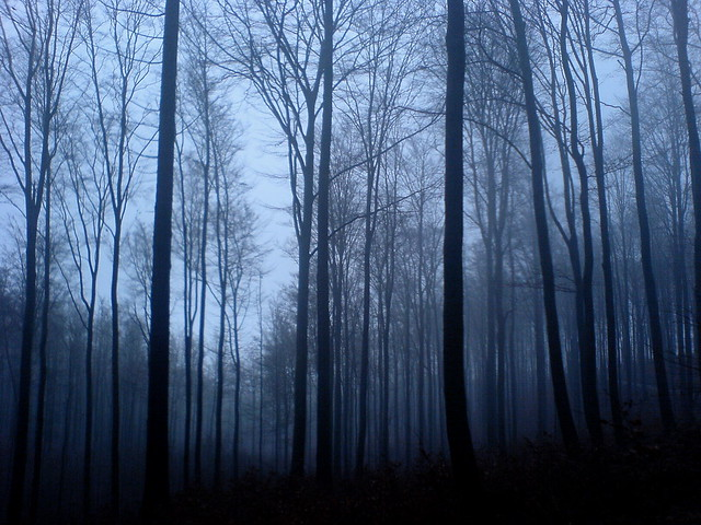 Magic forest: Blue