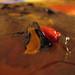 Small photo of Paint - Nadia (Acrylic)