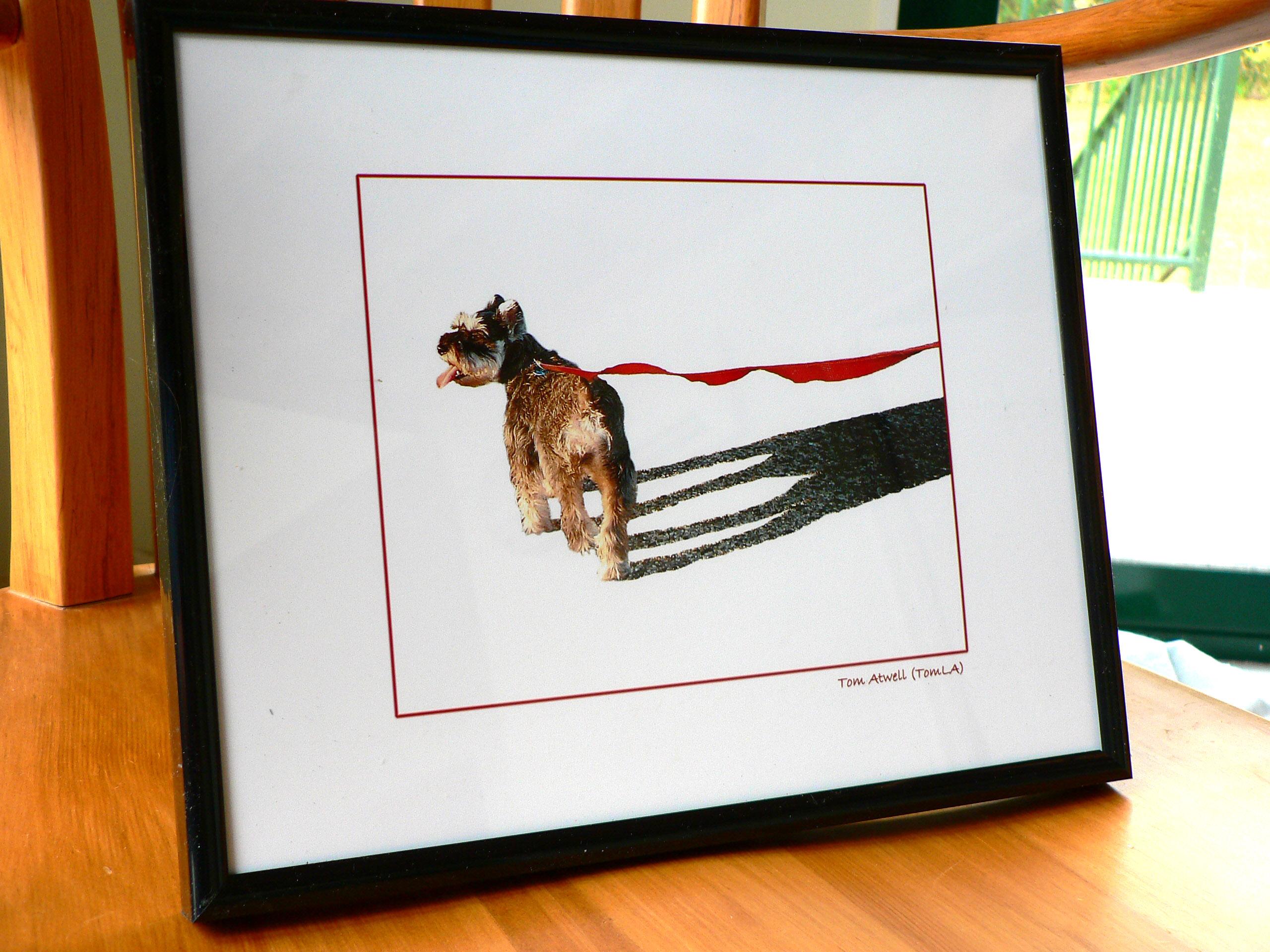 Brenda S Dog Grooming Surrey Bc