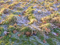 frost_and_grass