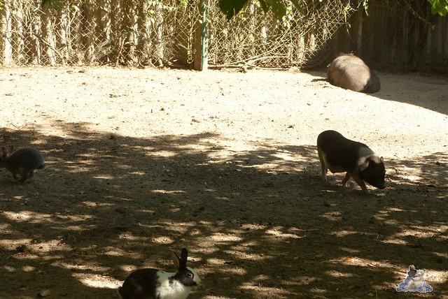 Tierpark Perleberg 09.08.2015 175