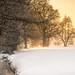 Golden winter sunset by hjuengst