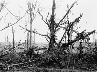 Scene in Maple Copse, July 1916 / Vue de Maple Copse, juillet 1916