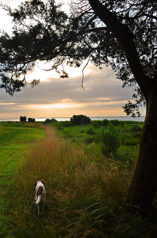 Metompkin Bay (1)