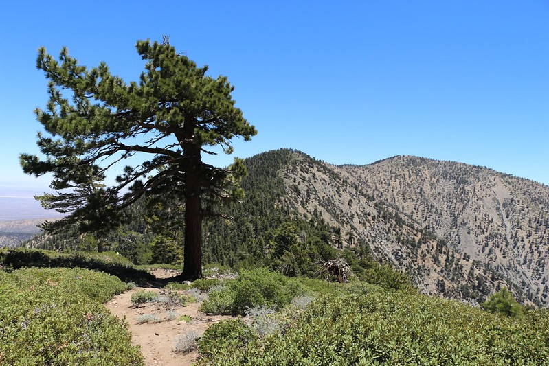 Looking back east toward Mount Burnham and Mount Baden-Powell from the PCT near Mount Throop.