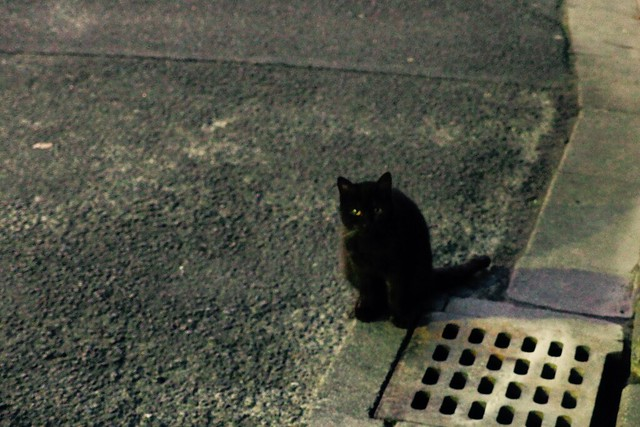 Today's Cat@2016-12-27