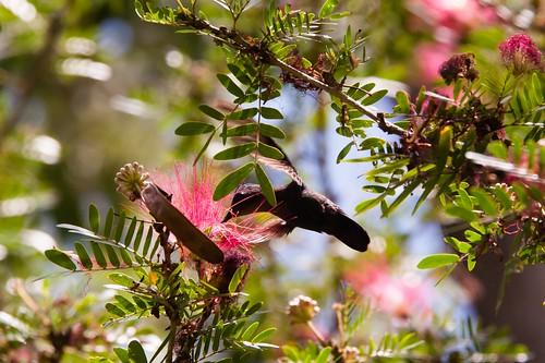 Dominica-2014-02-13-3658