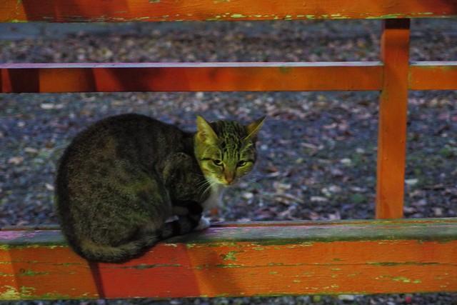 Today's Cat@2016-12-20