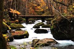 奥入瀬渓流ー橋