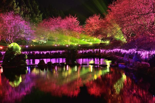 九族文化村夜櫻 Formosan Aboriginal Culture Village
