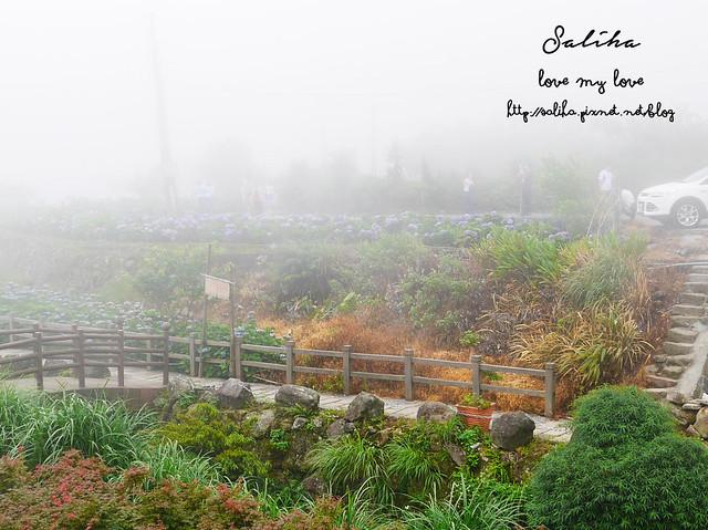 陽明山竹子湖景點 (2)