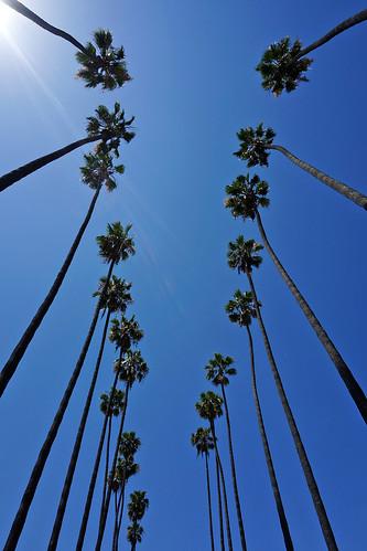 Longstreet Palms