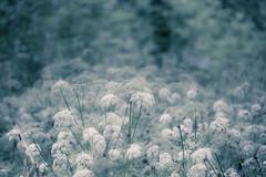 Chromatic flowers