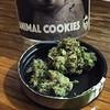Animal Cookies from @growopfarms for tonight's taste test. #olywa #tastetest #i502 #indicahybrid