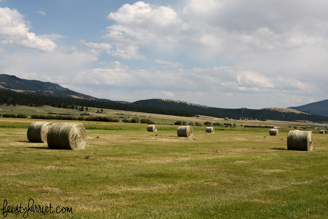 WesternMontana12_feistyharriet_July 2015