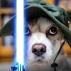milou the jedi dog
